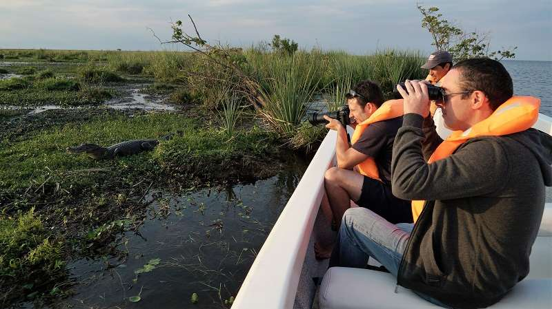 Enjoy close contact with wildlife as you motor around in small boats in the wetlands