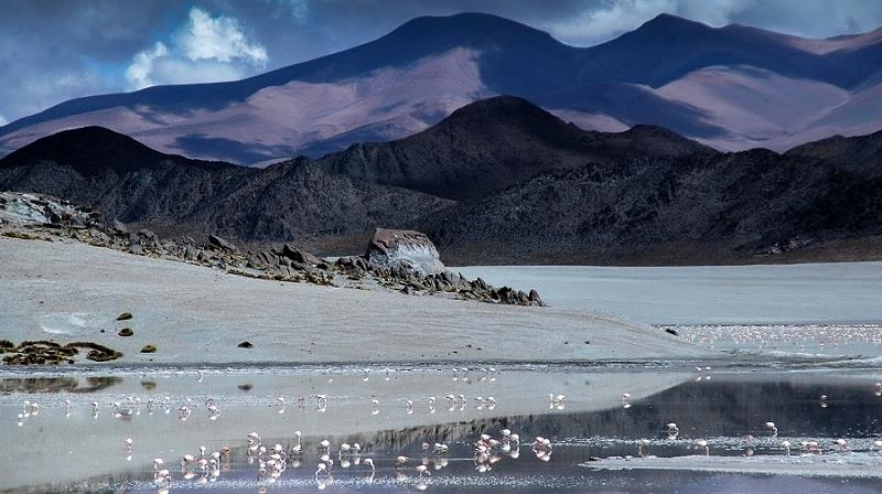 High altitude lakes are home to flamingos, guanacos, llamas and other Puna fauna.