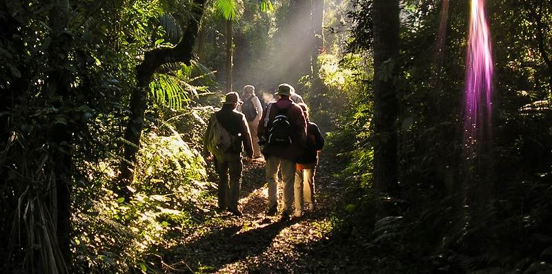 Whether exploring on foot or by boat our expert jungle guides will explain this incredible environment.