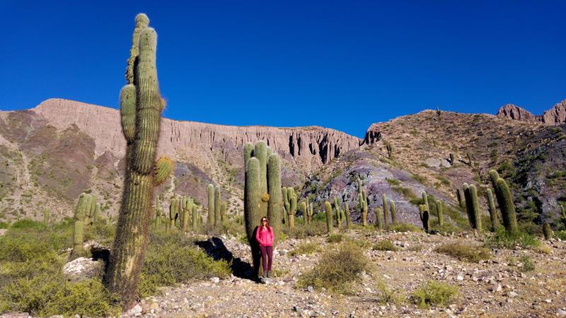 Trekking Salta and touring the surrounding countryside gets you among these huge Cardon cacti.